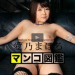 マンコ図鑑 愛乃まほろ